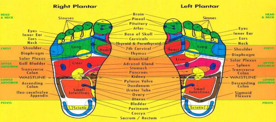 Refleksoloji- Bedenin Organlarına ve Sistemlerine Denk Gelen Refleks Noktaları